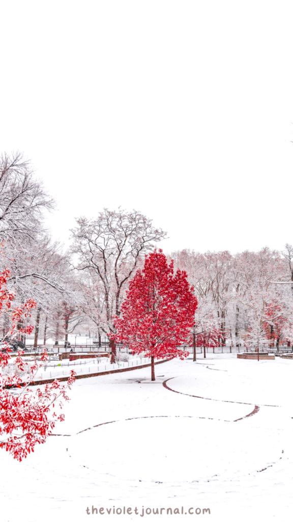 snowy landscape wallpaper