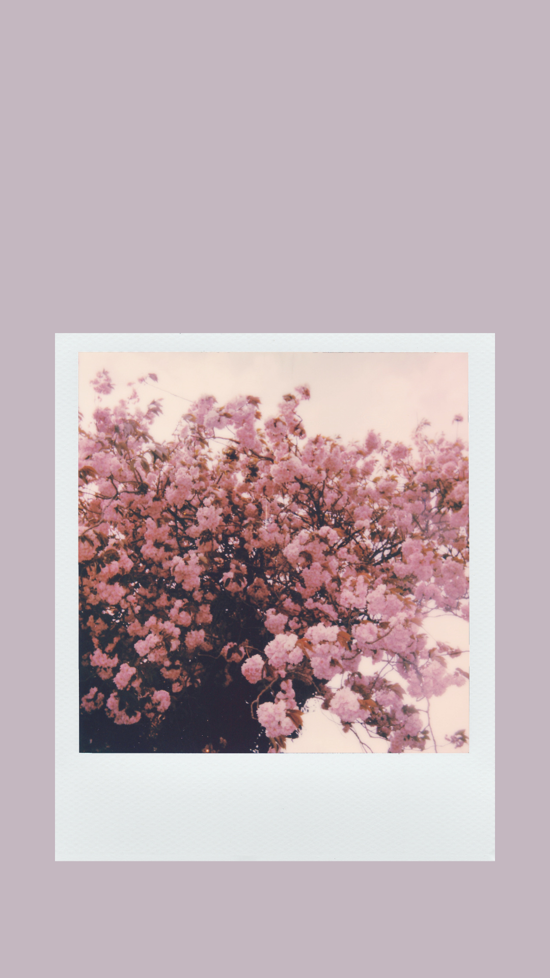 Aesthetic Polaroid Wallpaper for Spring